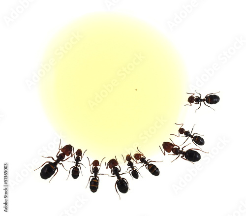 Ameisen am Honigtropfen