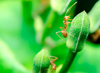 close up shot of ants climbing up plants in nature