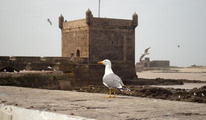 Essaouira fortress