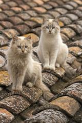 Gatos en el tejado.