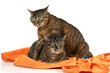Ein Paar Katzen