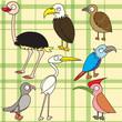birdset