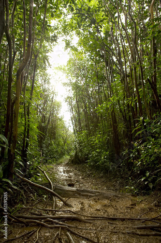 Tropical rainforest floor