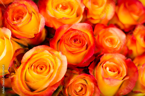 canvas print picture orange Rosen