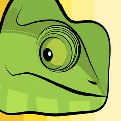 Chameleon illustration