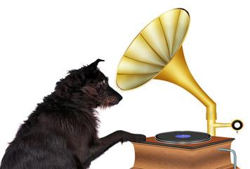 Musikliebhaber