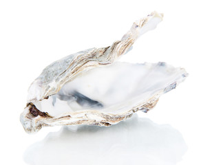 Open oyster isolated on white