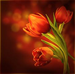 Fototapeta czerwone tulipany na czerwonym tle