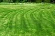 frisch geschnittener Rasen