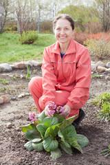 gardener in Bergenia plant