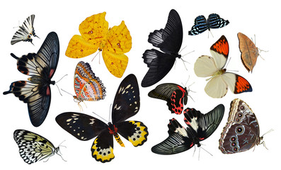 collection of butterflies isolated on white insects