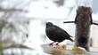 Vögel am Futterhaus
