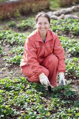 Mature woman loosen the strawberries