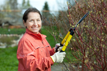 Mature woman trimming bough of an bush