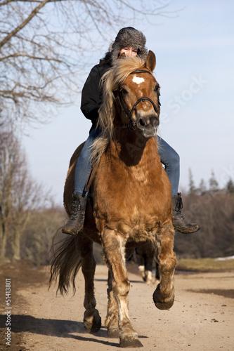 Reiterin auf Haflinger Pony