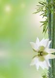 Fototapety flore aquatique, décor relaxant