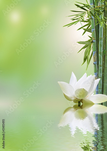 flore aquatique, décor relaxant