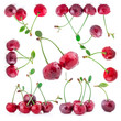 Collection of sour cherry isolated on a white background