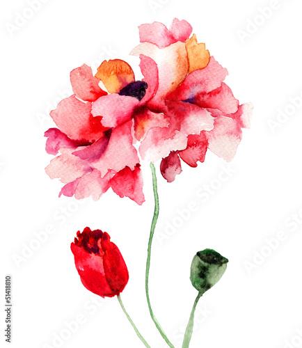 Colorful Poppy flowers © Regina Jersova