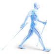canvas print picture 3d rendered medical illustration - nordic walking
