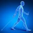 3d rendered medical illustration - nordic walking