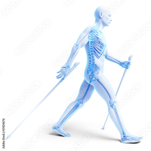3d rendered medical illustration - nordic walking