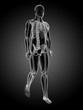 3d rendered medical illustration - walking guy