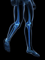 3d rendered medical illustration - skeletal legs