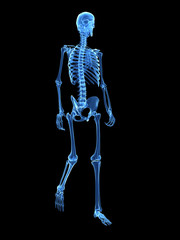3d rendered medical illustration - walking skeleton