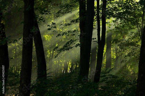 Foto op Canvas Bos in mist Forest
