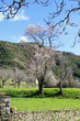 trees in spring in Huesca