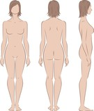 Vector illustration of woman's figure. Front, back, side views