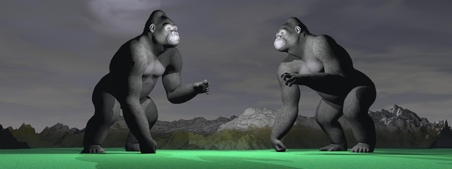 Two gorillas which bagarent