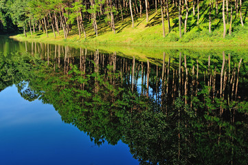 Reflection of lake in  Pang Ung Forestry Plantations, Maehongson