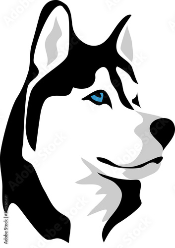 head of malamute
