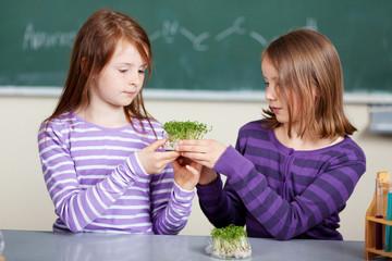 zwei schüler im biologieunterricht