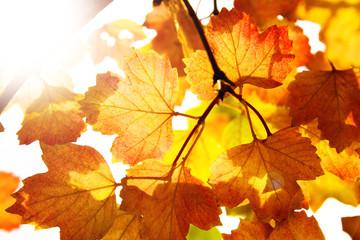 Herbstblätter am Baum