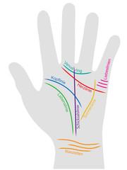Farbig beschriftete Infografik zum Thema Handlesen – Vektor