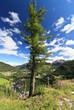 Dolomites - tree over the valley