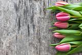 Świeże różowe tulipany - 51445096