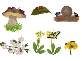 Insects set