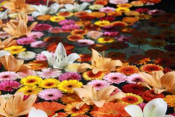 Blumen auf Wasser schwimmend