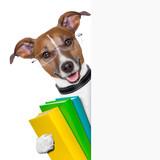 Fototapety school dog banner