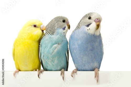 three birds are on a white background