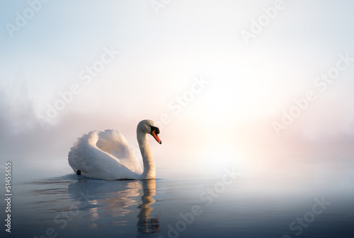 Tuinposter Zwaan Art Swan floating on the water at sunrise of the day