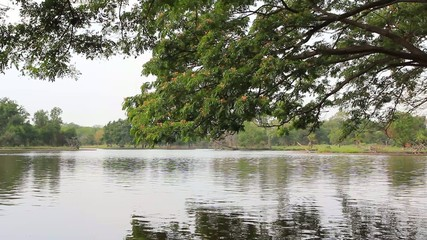 Lake view with tree