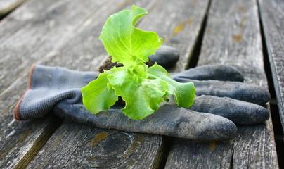 gants de jardin et jeune plant