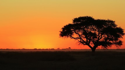 Sunset over the African plains - Melted Gold