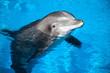 Leinwandbild Motiv Dolphin