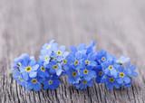 Fototapety Forgetmenot flowers